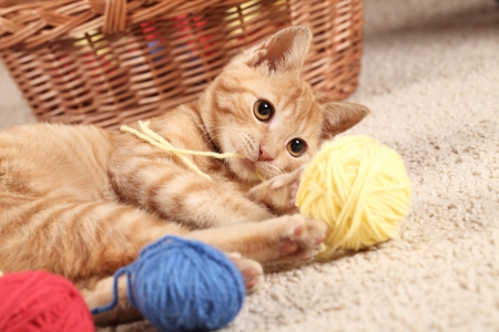 cat playing: Little cat playing with wool on the carpet Stock Photo
