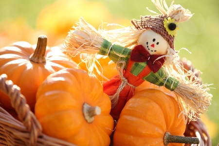 scarecrow: Scarecrow and pumpkins on colorful autumn background