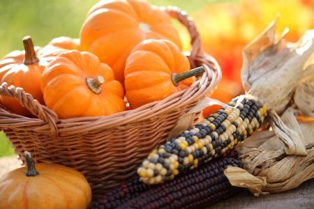 Pumpkins in basket and decorative corns