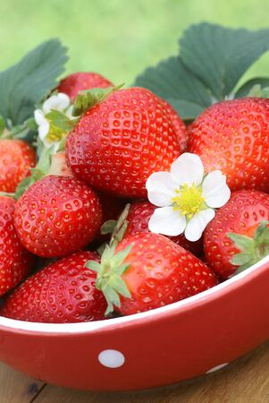 strawberies: Red bowl with strawberies on garden table.