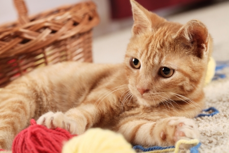Little cat playing with wool on the carpet Stock Photo