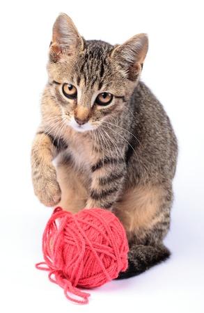 gato jugando: Gatito jugando con lana sobre fondo blanco.