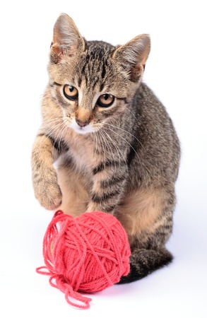 cat playing: Little cat playing with wool on white background. Stock Photo