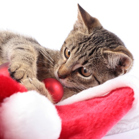 Kitty and Christmas decorations. Banque d'images