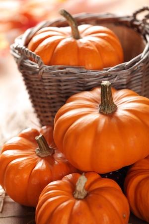Little pumpkins still life. Selective focus, shallow DOF.