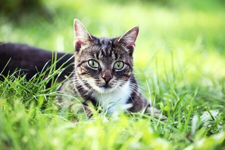 laying down: Close-up of cat in the garden. Selective focus,