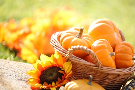 Pumpkins in basket and decorative corns  Defocused colorful leaves in the background
