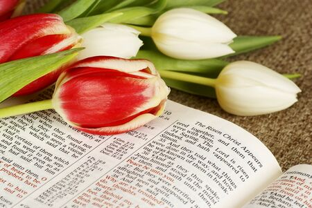 Bible opened on story about resurrection of Jesus and bunch of tulips. photo