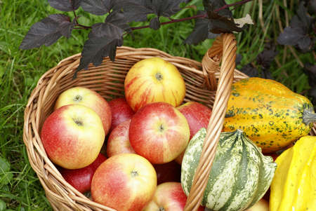 basketful: Basketful with apples and gourds in the garden.