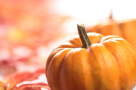 Nahaufnahme von Kürbissen mit Herbst Kopie Raum Standard-Bild - 20922812