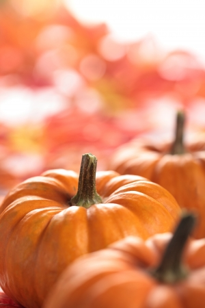 Closeup of pumpkins with autumn copy space