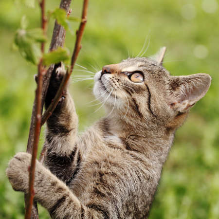 clambering: Young cat trying to climb on branch