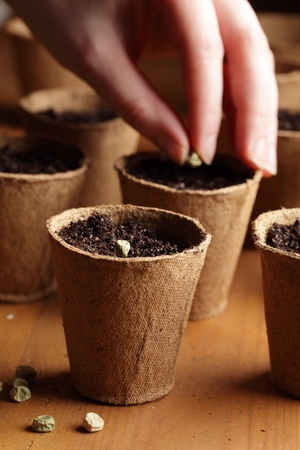 seed pots: Close-up of seeds, planting pots and hand with seed Stock Photo