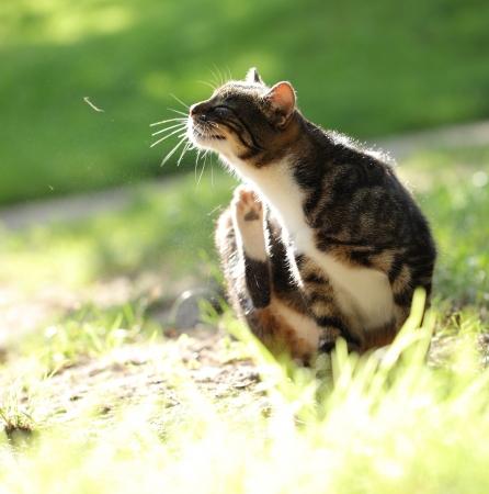 정원 INT 고양이를 긁는 스톡 콘텐츠