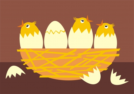baby chicken: Little chicks hatching out of eggs  Illustration