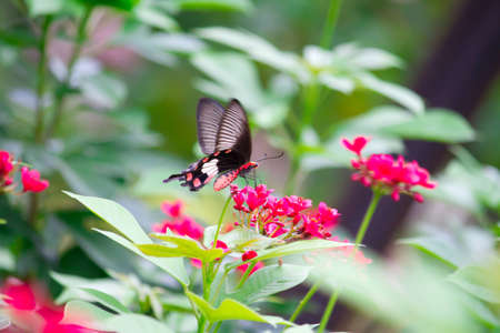 butterfly on pollen Stock Photo - 10344403