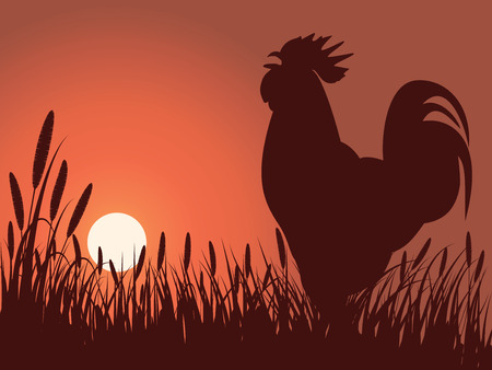 rooster greeting sunrise on a lawn Vector