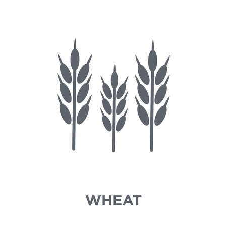 Wheat icon. Wheat design concept from Agriculture, Farming and Gardening collection. Simple element vector illustration on white background.