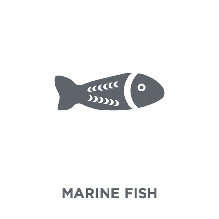 Marine Fish icon. Marine Fish design concept from Australia collection. Simple element vector illustration on white background.