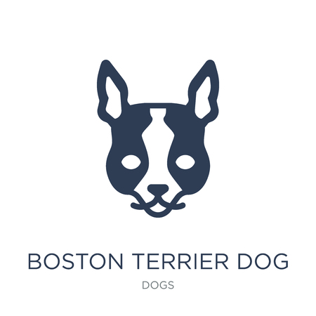 Boston Terrier dog icon. Trendy flat vector Boston Terrier dog icon on white background from dogs collection, vector illustration can be use for web and mobile, eps10
