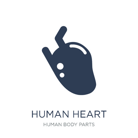 Human Heart icon. Trendy flat vector Human Heart icon on white background from Human Body Parts collection, vector illustration can be use for web and mobile, eps10  イラスト・ベクター素材