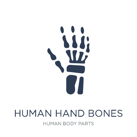 Human hand bones icon. Trendy flat vector Human hand bones icon on white background from Human Body Parts collection, vector illustration can be use for web and mobile, eps10 일러스트