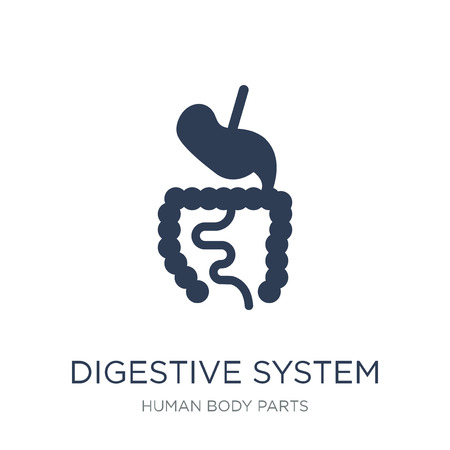 Digestive System icon. Trendy flat vector Digestive System icon on white background from Human Body Parts collection, vector illustration can be use for web and mobile, eps10