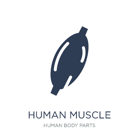 Human Muscle icon. Trendy flat vector Human Muscle icon on white background from Human Body Parts collection, vector illustration can be use for web and mobile, eps10