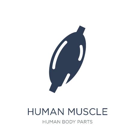 Symbol für den menschlichen Muskel. Trendiges flaches Vektorsymbol für menschliche Muskeln auf weißem Hintergrund aus der Sammlung menschlicher Körperteile, Vektorillustration kann für Web und Mobile verwendet werden, eps10