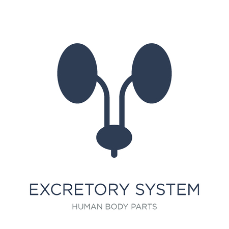 Excretory system icon. Trendy flat vector Excretory system icon on white background from Human Body Parts collection, vector illustration can be use for web and mobile, eps10 Stock Vector - 112138196