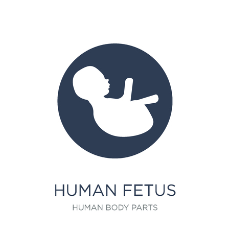 Human Fetus icon. Trendy flat vector Human Fetus icon on white background from Human Body Parts collection, vector illustration can be use for web and mobile, eps10