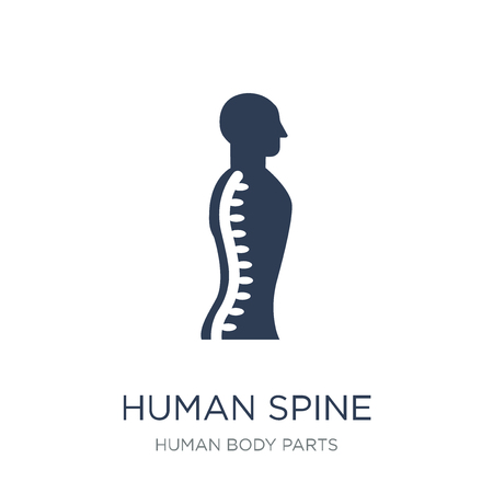 Icono de columna vertebral humana. Icono de columna vertebral humana de moda vector plano sobre fondo blanco de la colección de partes del cuerpo humano, Ilustración de vectores se puede utilizar para web y móvil, eps10