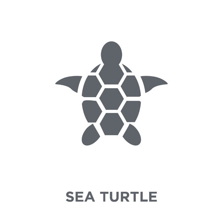 Sea turtle icon. Sea turtle design concept from Summer collection. Simple element vector illustration on white background. 스톡 콘텐츠 - 112417586