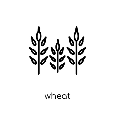 wheat icon. Trendy modern flat linear vector wheat icon on white background from thin line Agriculture, Farming and Gardening collection, outline vector illustration