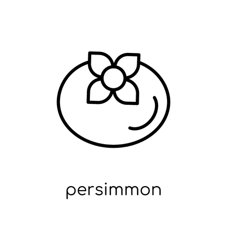 persimmon icon. Trendy modern flat linear vector persimmon icon on white background from thin line Fruit and vegetables collection, outline vector illustration  イラスト・ベクター素材