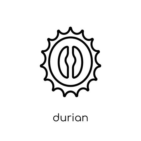 durian icon. Trendy modern flat linear vector durian icon on white background from thin line Fruit and vegetables collection, outline vector illustration