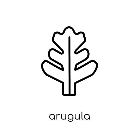arugula icon. Trendy modern flat linear vector arugula icon on white background from thin line Fruit and vegetables collection, outline vector illustration