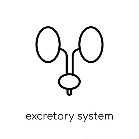 Excretory system icon. Trendy modern flat linear vector Excretory system icon on white background from thin line Human Body Parts collection, editable outline stroke vector illustration