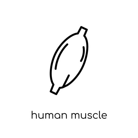 Human Muscle icon. Trendy modern flat linear vector Human Muscle icon on white background from thin line Human Body Parts collection, editable outline stroke vector illustration Illustration