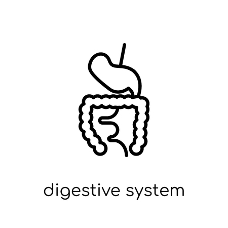Digestive System icon. Trendy modern flat linear vector Digestive System icon on white background from thin line Human Body Parts collection, editable outline stroke vector illustration