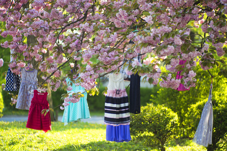 childs: Childs colorful dresses red blue white black colors on hangers hanging on the pink japanese cherry blossoms tree in broad daylight in the garden, horizontal picture Stock Photo