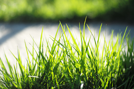 grass plot: Lawn of lush bright fresh green grass closeup on natural background copyspace, horizontal picture Stock Photo