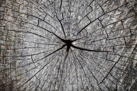 fissures: Beautiful grey aged cut wood with many fissures and black whole in the middle closeup background, horizontal picture Stock Photo