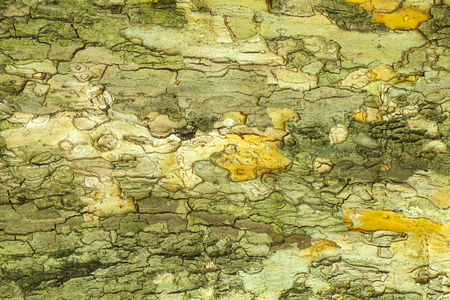 bark: Dry old cracked tree bark texture