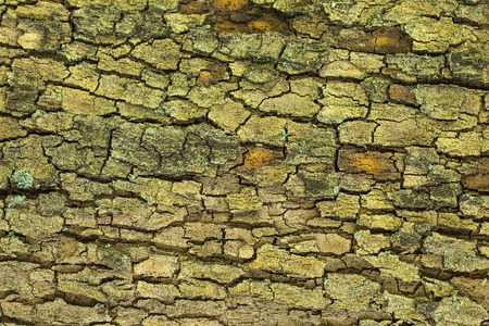 Aged mossy tree bark texture closeup