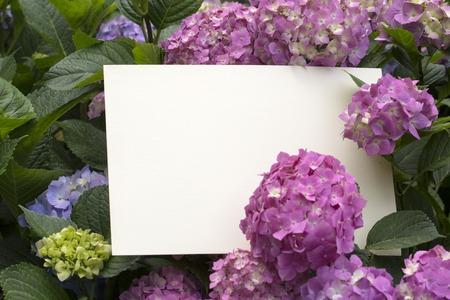 paper note: Nota de papel en blanco en hermosas flores de hortensia