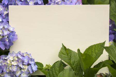 papier vierge: Blank note papier dans fleurs d'hortensia close up