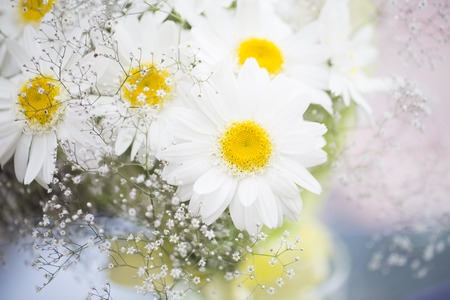 bouqet: A white chamomile flowers bouqet Stock Photo