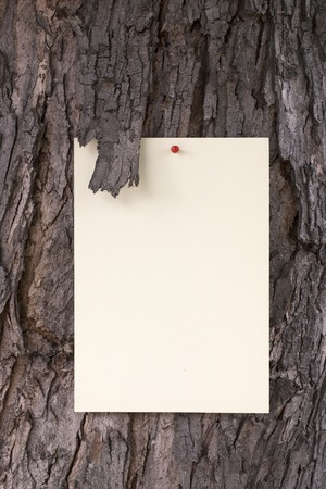 memory stick: Blank sheet of paper notice at the bark of old tree. Stock Photo