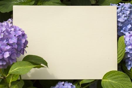 bloomy: Blank paper note in bloomy hydrangea flowers